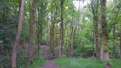 Blackley Forest