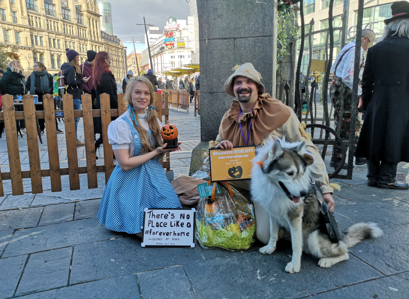 dog, halloween, scary, spooky, cute, manchester