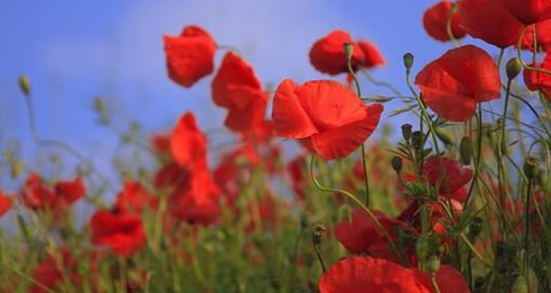 Soldier rememberance