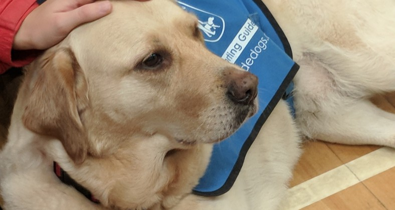 Rona the Guide Dog